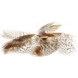 plumes de perdrix dvx devaux
